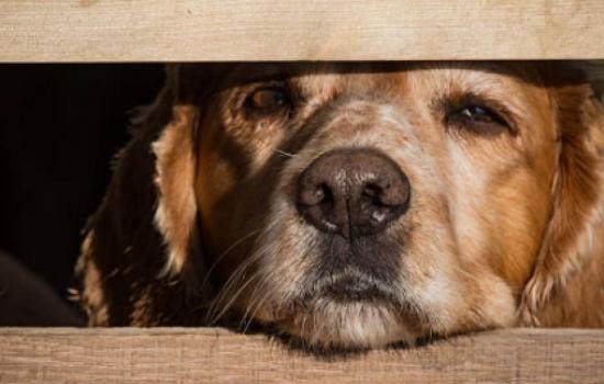 Aberrante caso de maltrato animal en España