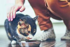Mujer murió tras ser mordida por su gato en Neiva